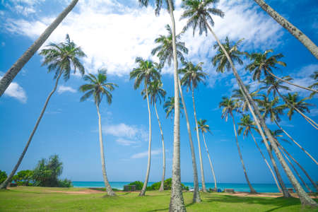 Tropisch strand met exotische palmbomen