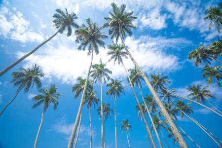 Untouched tropisch strand in Sri Lanka