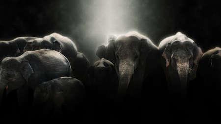 Digital photo manipulation of elephants in Sri Lanka
