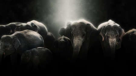 manipulation: Digital photo manipulation of elephants in Sri Lanka