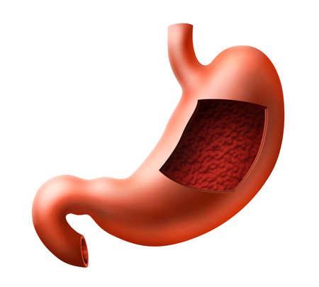 An illustration of human stomach with inside view Reklamní fotografie