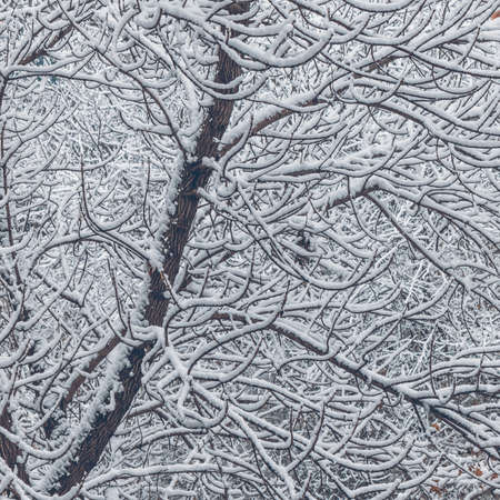 backwoods: Winter snowy tree branches and twigs vintage stylized background