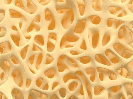 osteoporosis: Hueso estructura esponjosa primer plano, textura sana del hueso