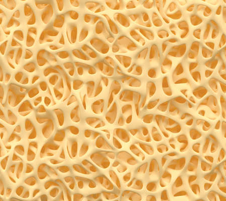 Structure osseuse