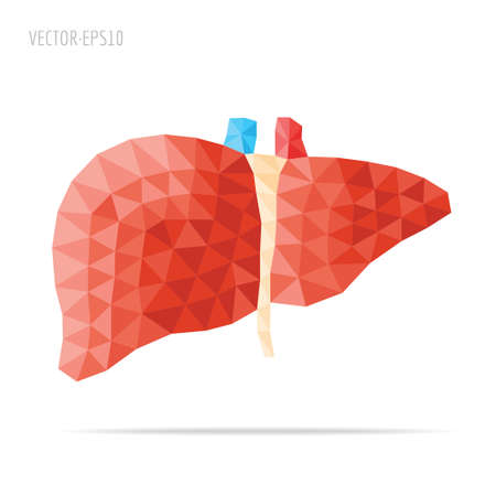 higado humano: Facetado Hígado