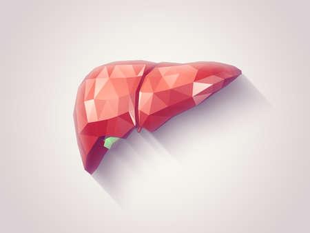 Illustratie van menselijke lever met gefacetteerde low-poly geometrie effect Stockfoto