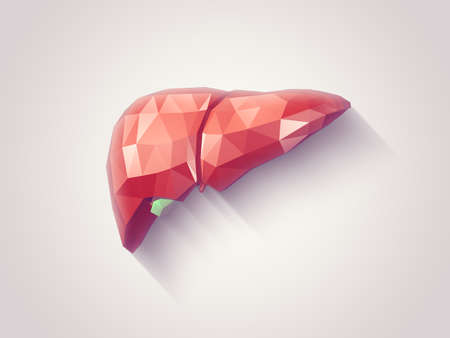 human anatomy: Illustration of human liver with faceted low-poly geometry effect Stock Photo