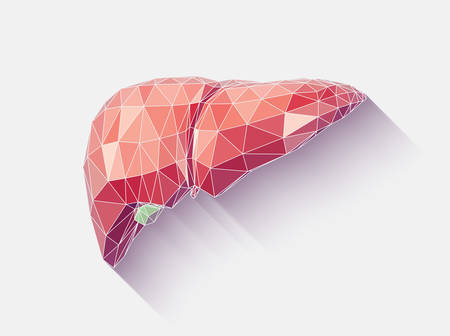 human liver: Vector illustration of human liver with faceted low-poly geometry effect