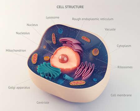 estructura anatómica de la célula animal biológico con orgánulos Foto de archivo