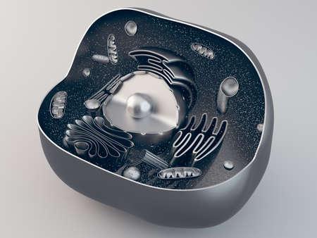 celula animal: estructura anatómica de la célula animal biológico con orgánulos, ilustración 3d