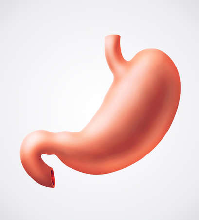 gullet: An illustration of human stomach Stock Photo