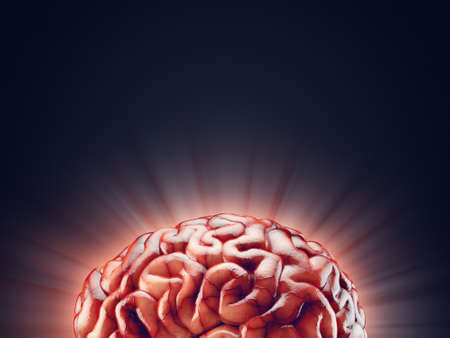 Realistic 3d Illustration of human brain with empty space