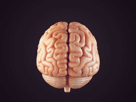 Realistic 3d Illustration of human brain front view isolated on black Stock Photo