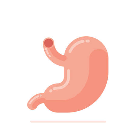 Flat design vector Illustration of human stomach isolated on white