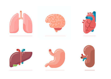 Flat design illustration of human organs - brain, heart, lungs, liver, stomach, kidney Illustration