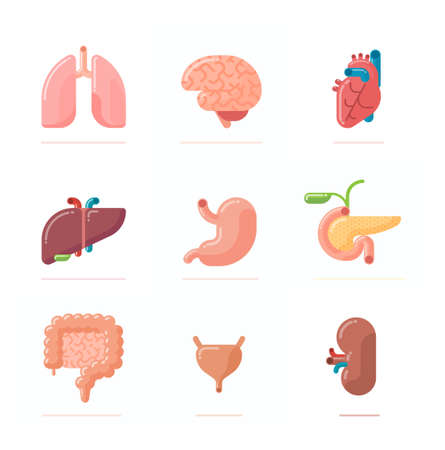 Flat design illustration of human organs - brain, heart, lungs, liver, stomach, kidney, intestine, urinary bladder and pancreas