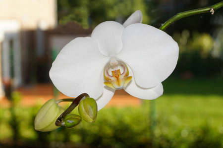 An orchid in closeup