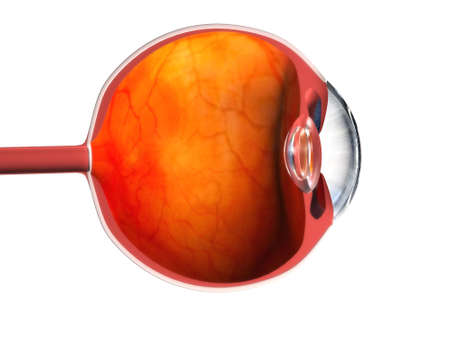 eye anatomy Stock Photo - 488506