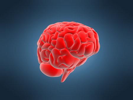 cerebra: red brain Stock Photo