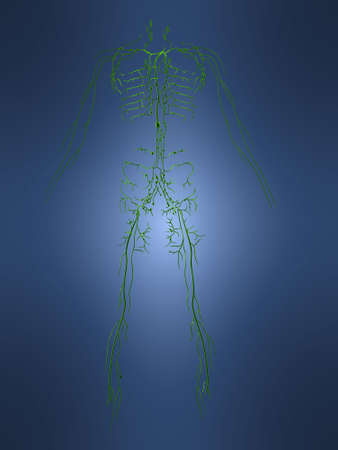 lymphatic systems photo