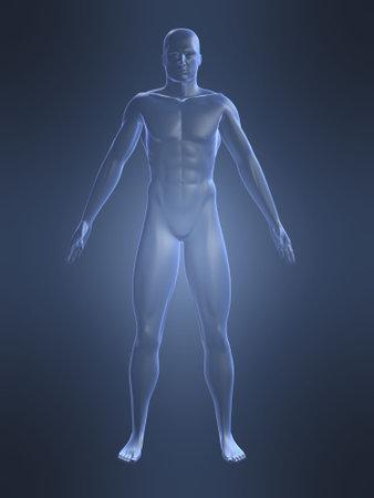 man ass: male shape