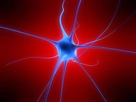 neurona: c�lula de la neurona