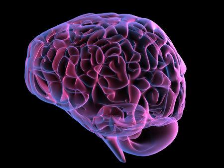 human brain Stock Photo - 660237