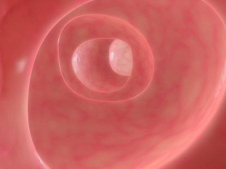 bowel disease: Col�n saludable