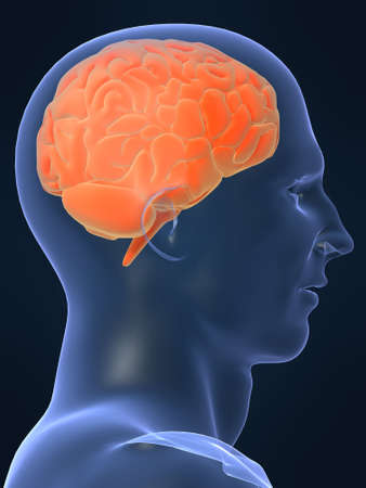 head shape with brain Stock Photo - 705248