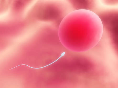 human egg with sperm photo
