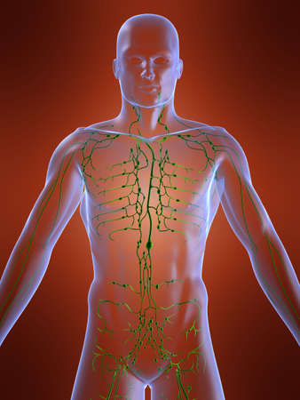 lymphatic system Stock Photo - 705163