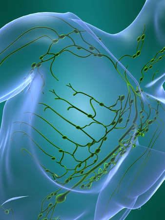 lymphatic system Stock Photo - 705321