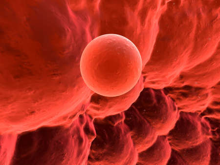 human egg photo