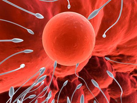 esperma: Huevo y esperma humano  Foto de archivo