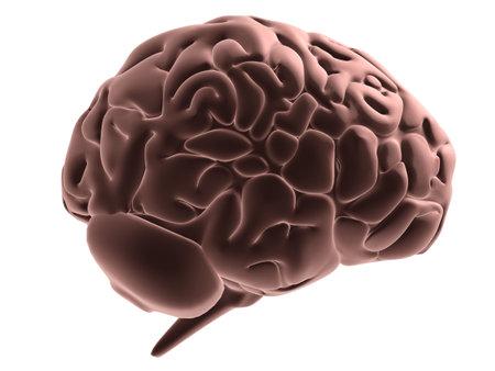 understand: human brain