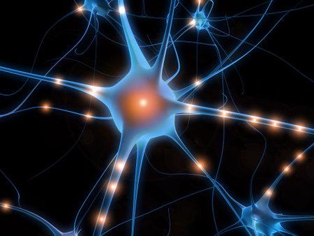 cellule nervose: Cellule nervose  Archivio Fotografico