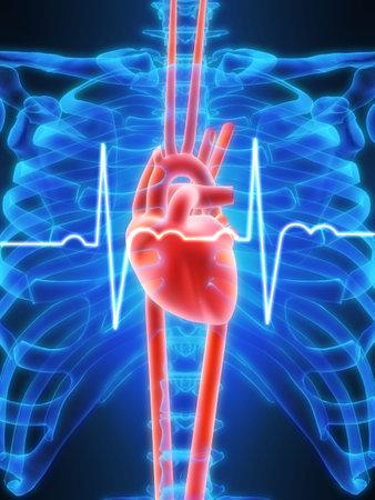 내부의: heartbeat