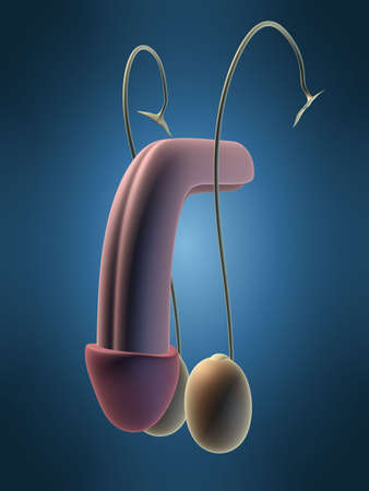 testicular: urinary Stock Photo