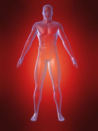body shape: forma del corpo umano Archivio Fotografico