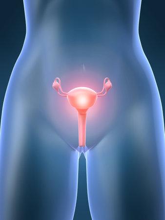 ovarios: Reproductiva de la mujer