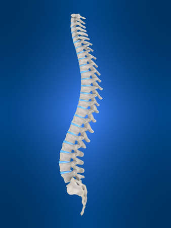 herniated: human spine