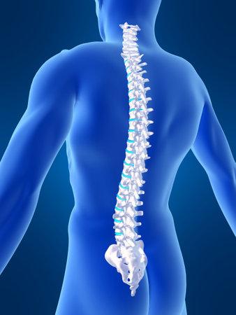 columna vertebral humana: humanos la columna vertebral  Foto de archivo
