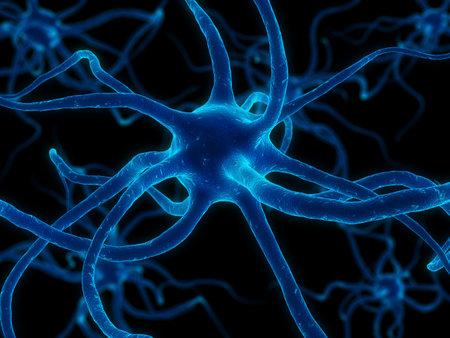 dendrites: neurone cell