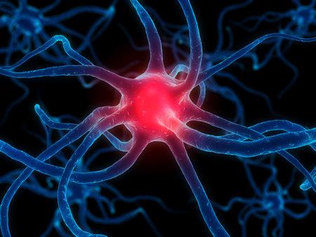 cellule nervose: neurone attivo