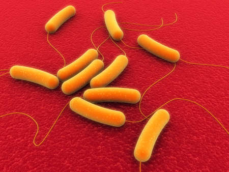 coli bacteria Stock Photo - 1015950