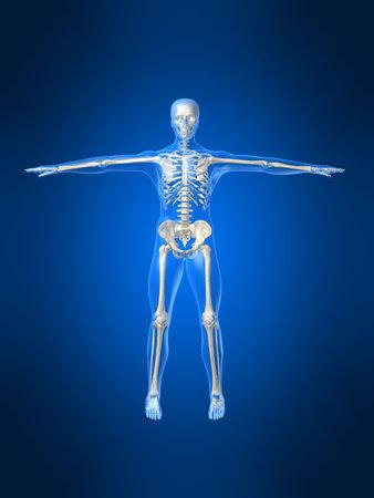 esqueleto humano Foto de archivo - 1066743