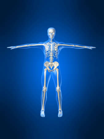 human skeleton Stock Photo - 1066743