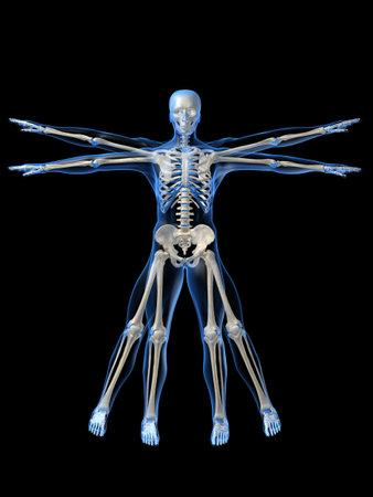 skeleton da vinci style photo