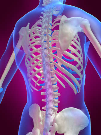 skeletal back Stock Photo - 1066756