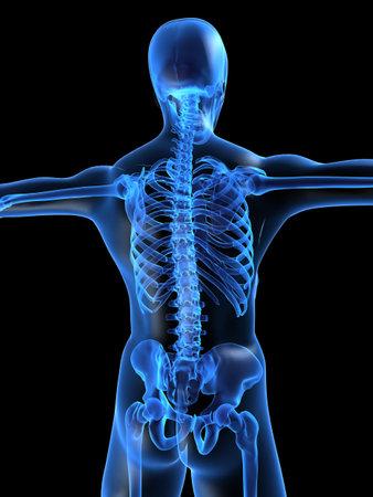 human skeleton Stock Photo - 1066777